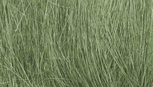 FG174 Grass