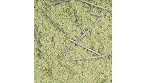 Timberline forest floor